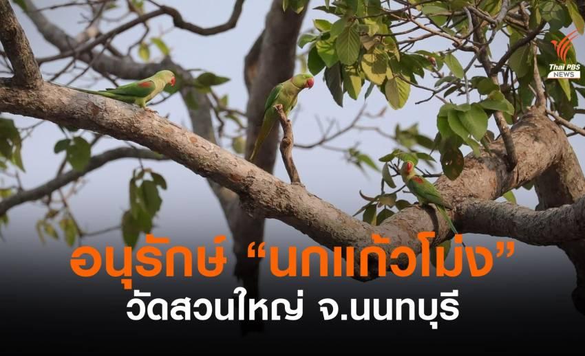 """""""นกแก้วโม่ง"""" กับความหวังอนุรักษ์อัตลักษณ์ จ.นนทบุรี"""