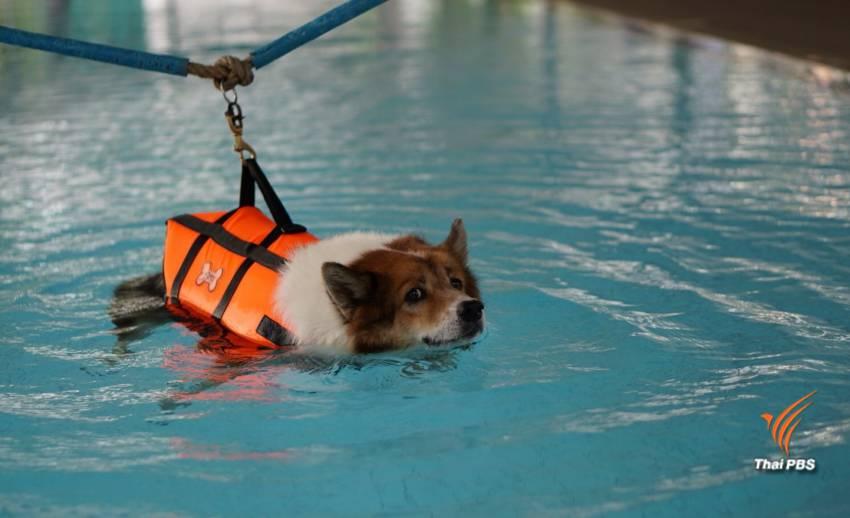 """""""สระสุวรรณชาด"""" น้ำพระราชหฤทัยในหลวงรัชกาลที่ 9 ช่วยสุนัขพ้นเจ็บ"""