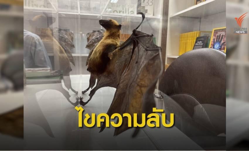 """นักวิจัยไทยไขความลับ """"ค้างคาว"""" ไม่น่ากลัว"""