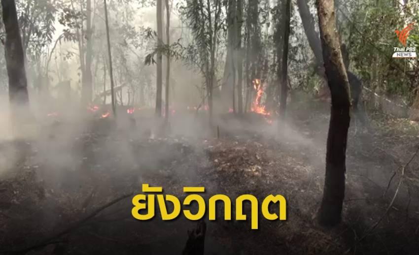 """ลมแรง-แล้งจัด อุปสรรคดับไฟไหม้ป่าพรุ """"นครศรีฯ-สงขลา"""""""