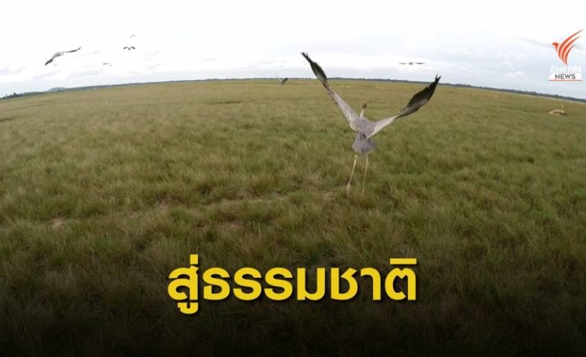 """เปิดแหล่งเรียนรู้ """"นกกระเรียนพันธุ์ไทย"""" ท่องเที่ยวเชิงนิเวศ"""