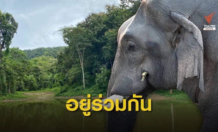 """วัด-ชุมชนร่วมสร้างแหล่งน้ำ ลดขัดแย้ง """"ชาวบ้าน-ช้าง"""" จ.กาญจนบุรี"""