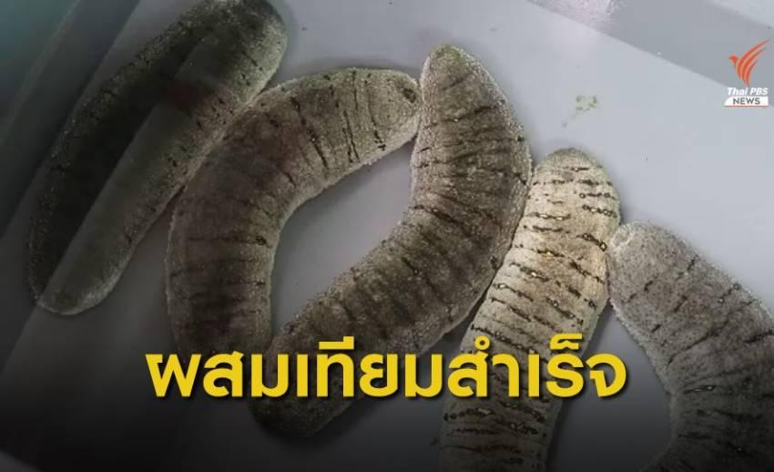 """""""ตรัง"""" ผสมเทียมปลิงทะเลขาวสำเร็จ เจ้าแรกของไทย"""