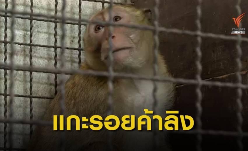 THE EXIT : แกะรอยค้าลิงข้ามชาติ จ.สุพรรณบุรี ตอน 1
